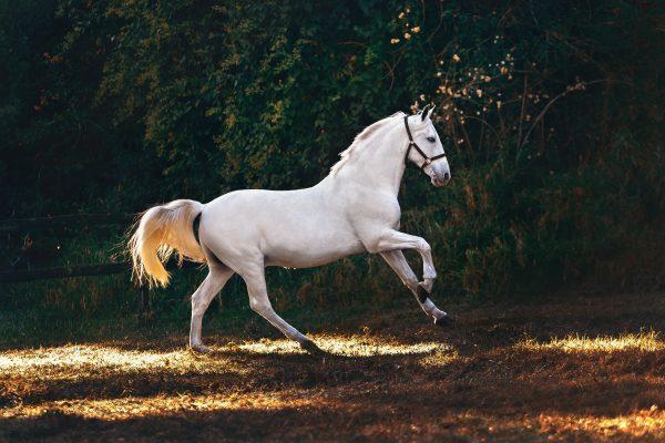 Guía sobre seguros para caballos