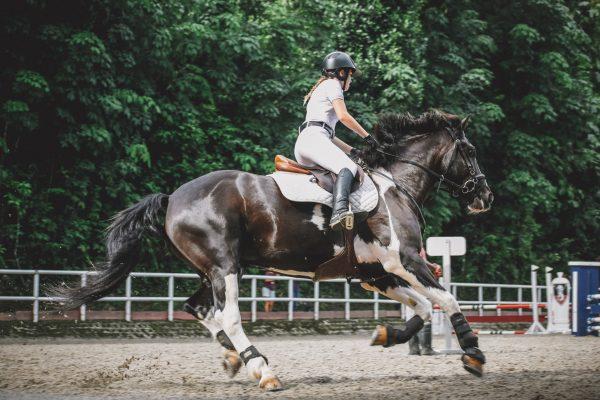 Guía de Seguros para caballos
