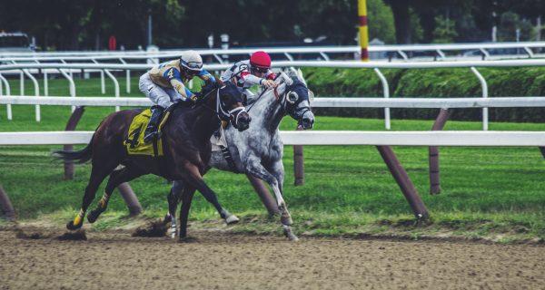 Guia de seguros para caballos